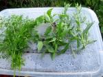 Herb Harvest