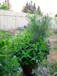 Herb Pot 1