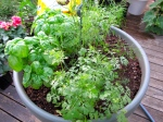 Herb Pot 2